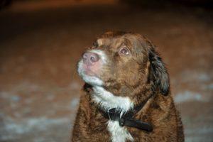 Hund raddad ur isvak